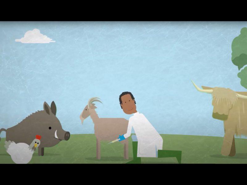 oie-video-2020-web-animal-pensant-02